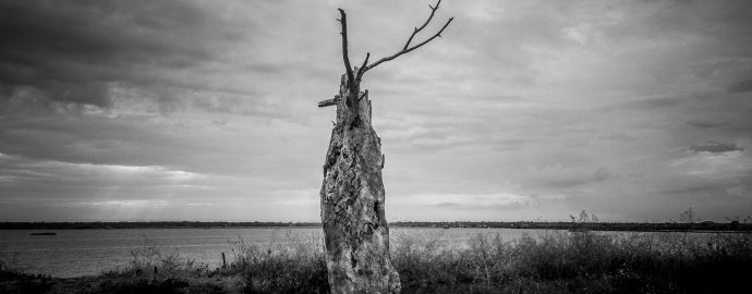 Soundtrack For Falling Trees - Transmissions Photo Exhibition